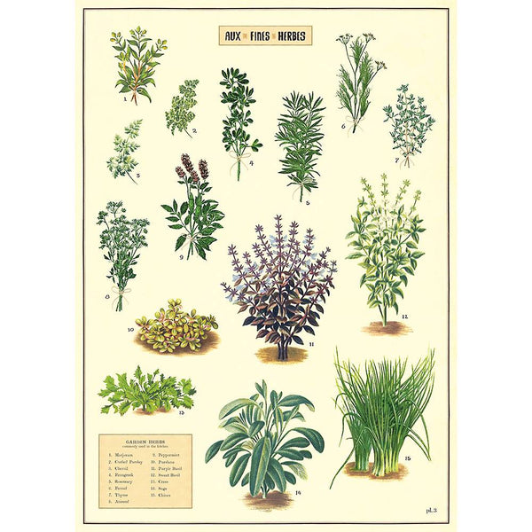 Cavallini & Co. Herbs No.02 Plakat 50x70cm - Norway Designs