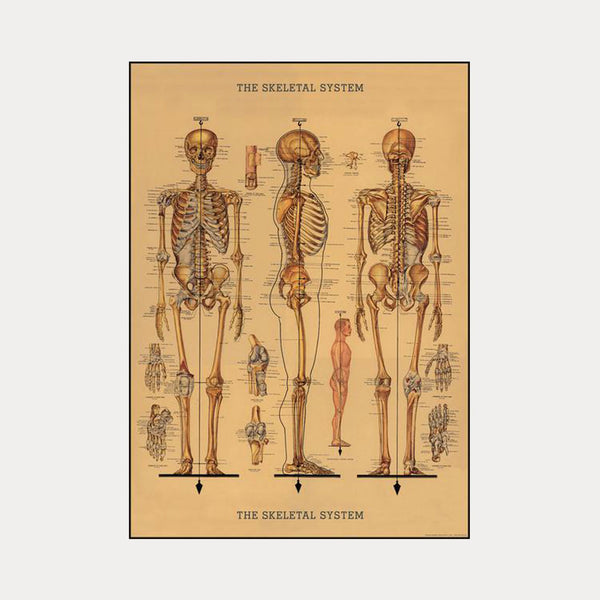 Cavallini & Co. Plakat No.08 The Skeleton System 50x70cm - Norway Designs