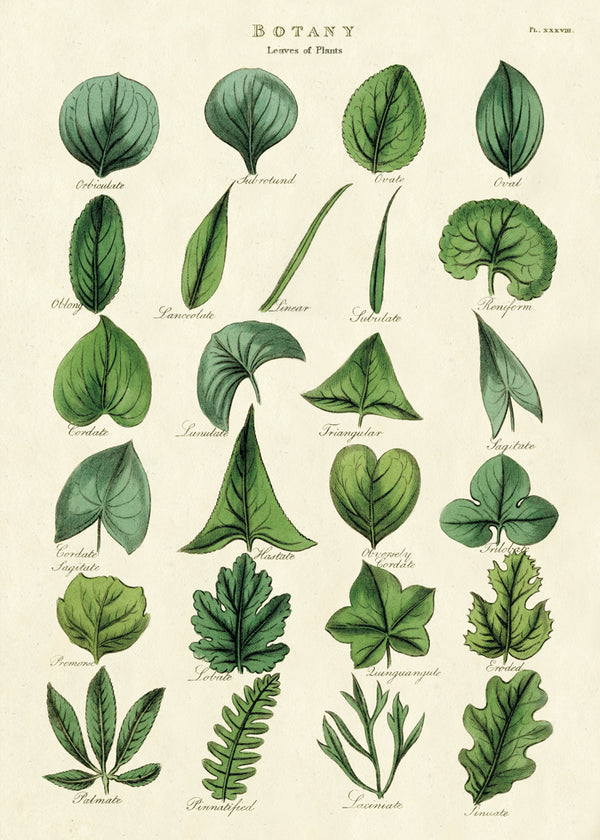 Cavallini & Co. Plakat NO.48 Leaf 50x70cm - Norway Designs