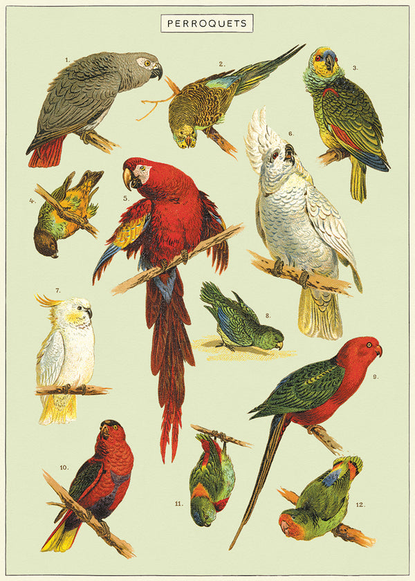 Cavallini & Co Plakat No.11 Parrot 50x70cm - Norway Designs
