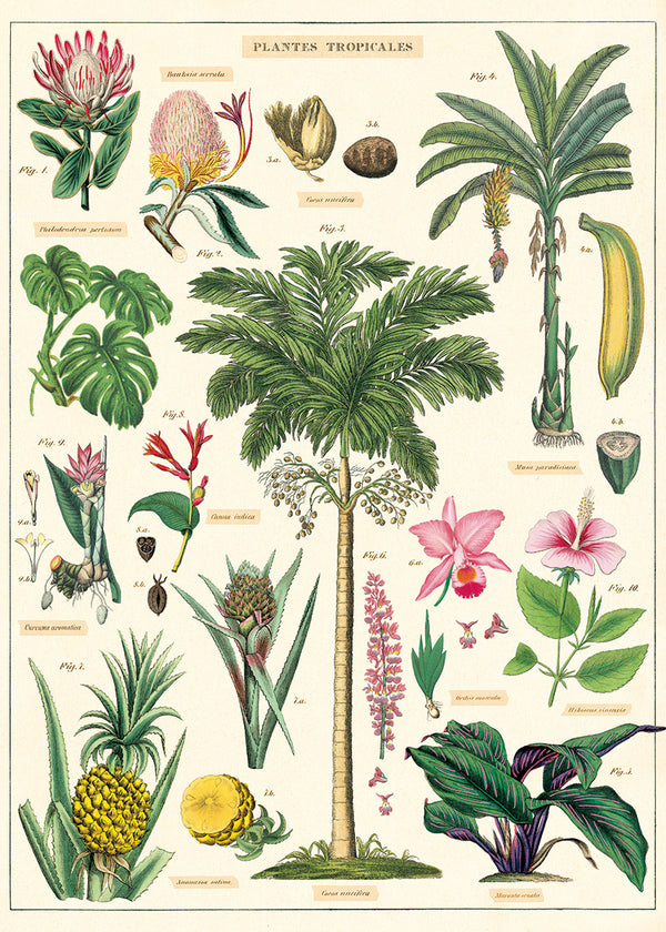 Cavallini & Co Tropical Plants No.12 Plakat 50x70cm - Norway Designs