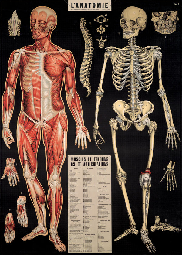 Cavallini & Co L'Anatomie No.32 Plakat 50x70cm Sort - Norway Designs