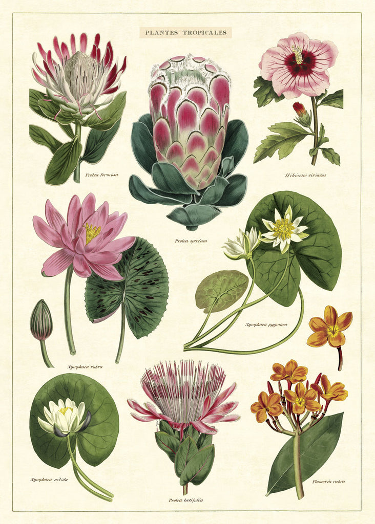 Cavallini & Co. Plantes Tropicales No.34 Plakat 50x70cm - Norway Designs