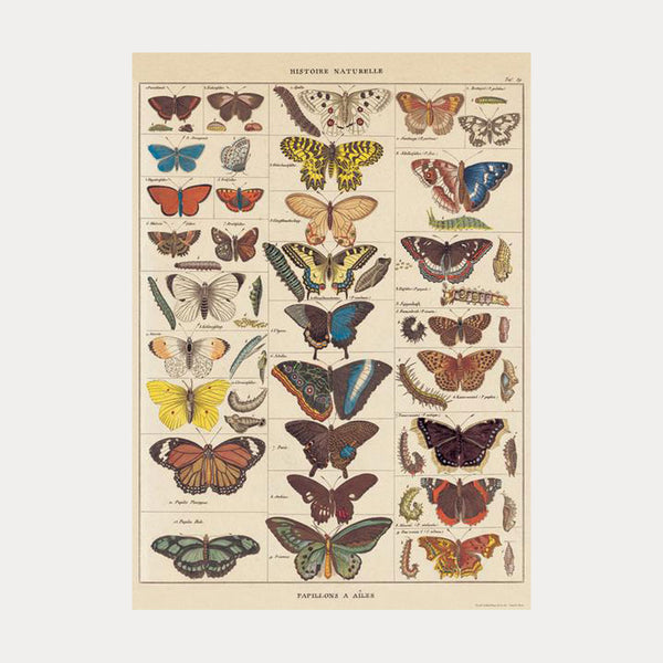 Cavallini & Co. Historie Naturelle, Papillons No.14 Plakat 50x70cm - Norway Designs