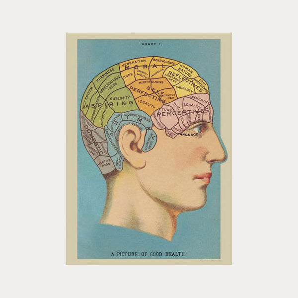 Cavallini & Co Phrenology No.01 Plakat 50x70cm - Norway Designs