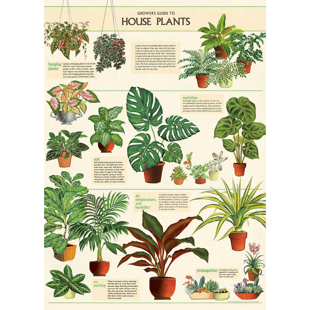 Cavallini & Co. - Plakat No.06 House Plants - Norway Designs