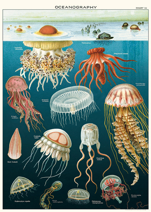 Cavallini & Co. - Jellyfish NO.46 Plakat 50x70cm - Norway Designs
