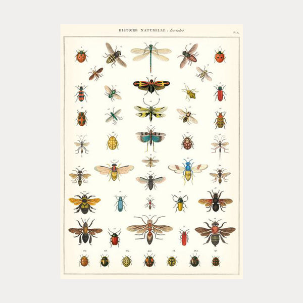 Cavallini & Co. Plakat No.13 Natural History of Insects 50x70cm - Norway Designs