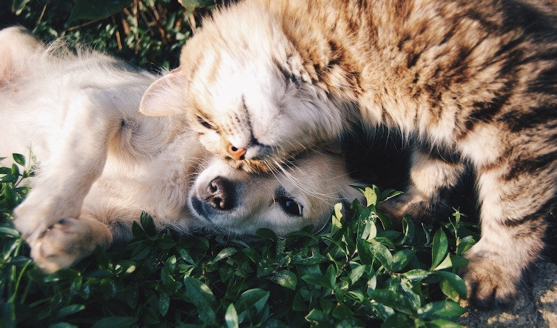Signs Your Pet Has Anxiety and How CBD Can Help