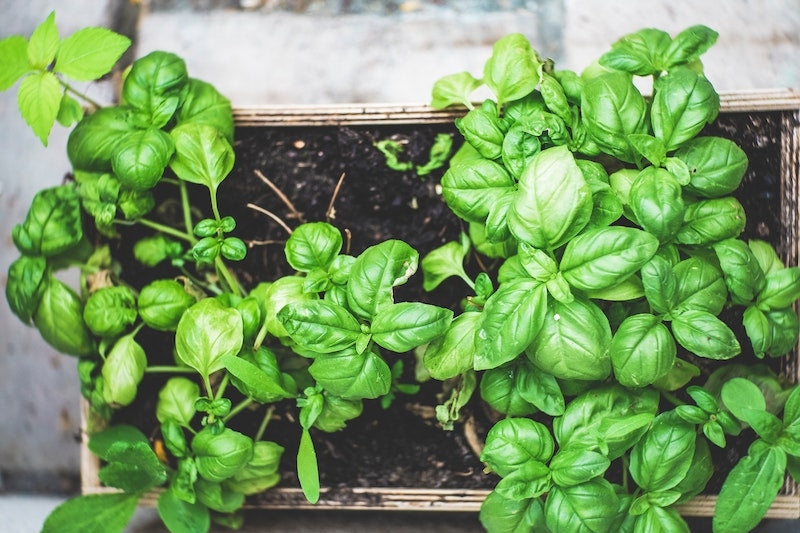 6 Tasty, Nutritious Vegetables You Can Easily Grow Indoors