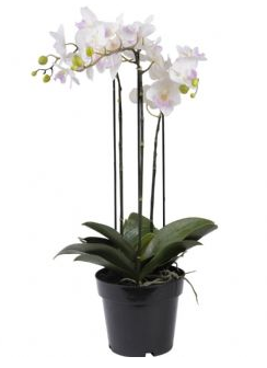 Faux White Orchid in Black Pot 71cm