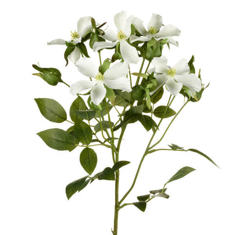 Wild Rose Stem - White