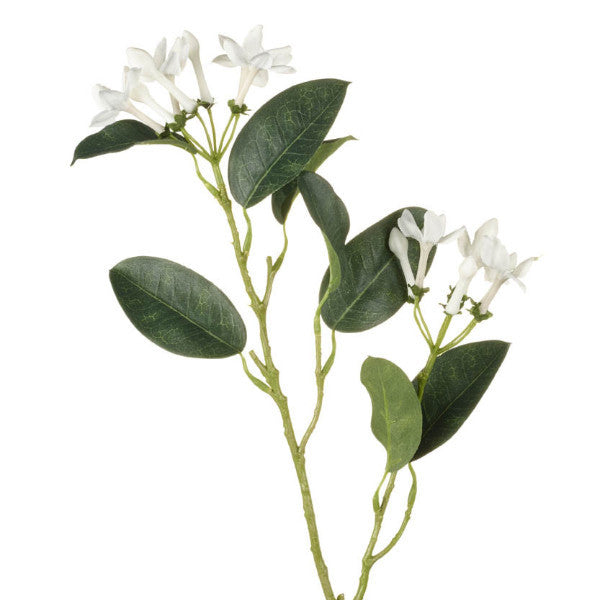Stephanotis Spray