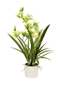 ORCHID CYMBIDIUM POTTED H660MM