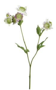 Astrantia Spray green/lilac