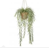 Potted Hanging Willow