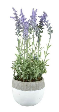 Large Potted Closed Lavender Lilac