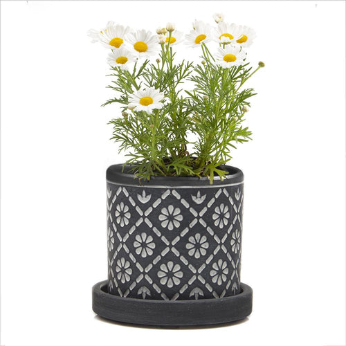 Big Balter Planter white flower