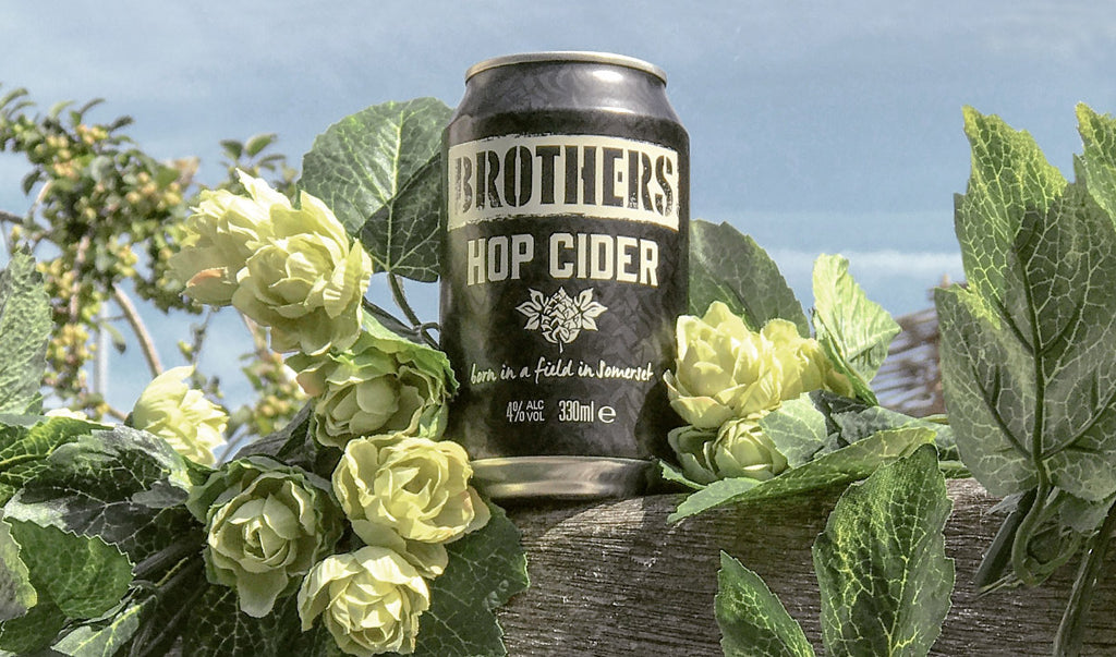 Brothers Hop cider can surrounded with Hop flowers