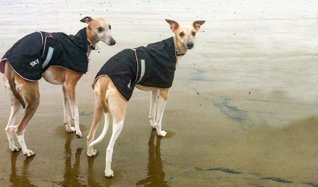 Furry Friends - Whippets
