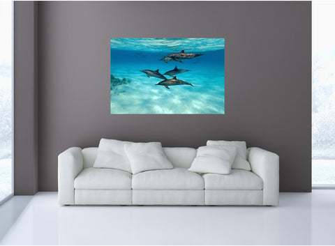 MiniMural: Dolphins #1 Wall Decal!