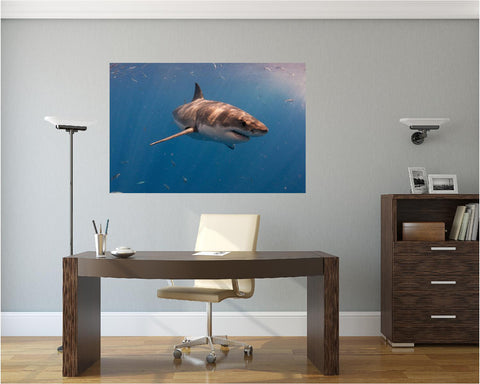 MiniMural: Great White Shark #2 Wall Decal!