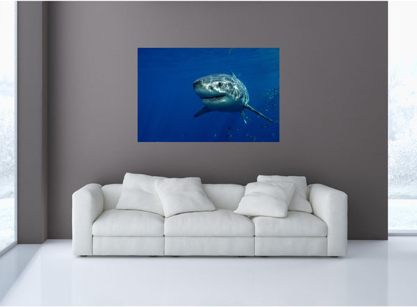 MiniMural: Great White Shark #1 Wall Decal!