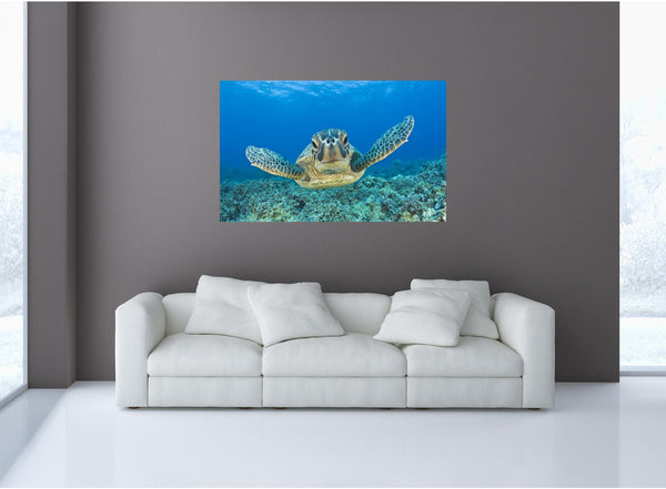 MiniMural: Tropical Coral Reef Sea Turtle Wall Decal!