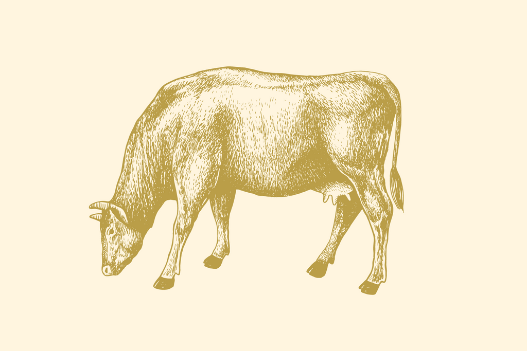 Access to beef cutting instructions
