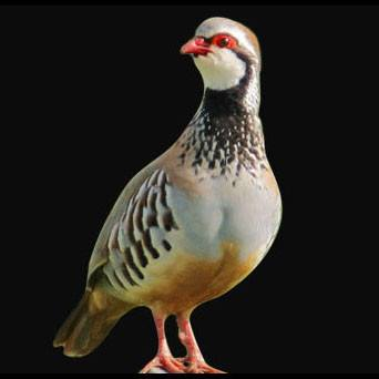 Red Legged Partridge - SOLEX CATSMO FINE FOODS