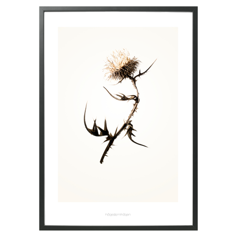 Hagedornhagen Art Print - 'Gold' Series #2