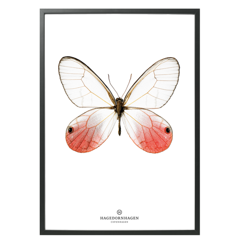 Hagedornhagen Butterfly Art Print -  'New Collection S13'