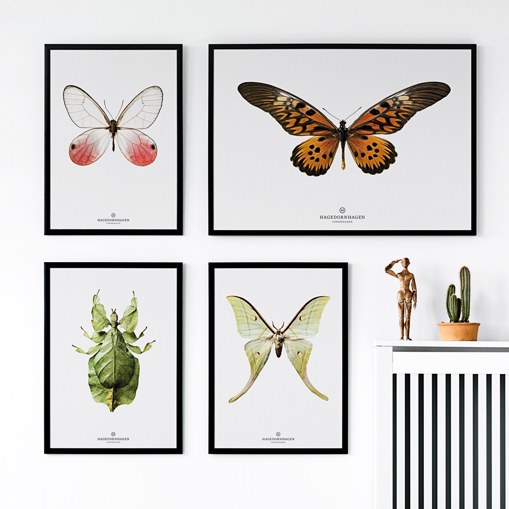 Hagedornhagen Leaf Insect Art Print -  'New Collection B10'