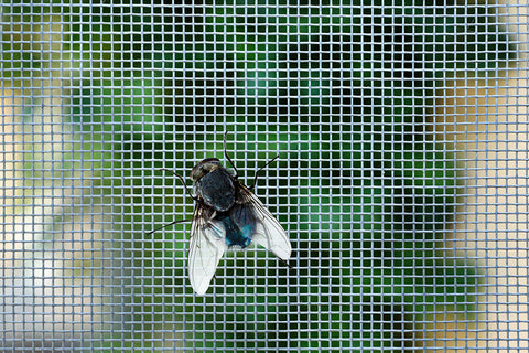 HEPA filters work much differently than how flies are trapped by a screen, as pictured.