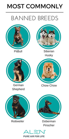 most commonly banned dog breeds