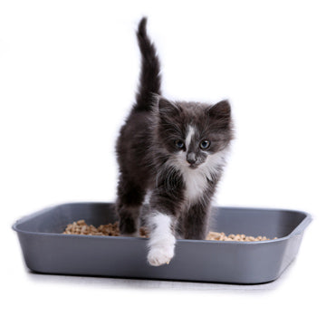 Cat getting out of a litter box
