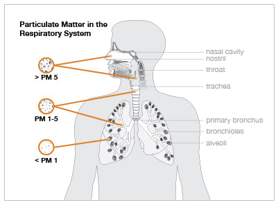 affect of particulate matter on respiratory system. An Alen Air Purifier may help.