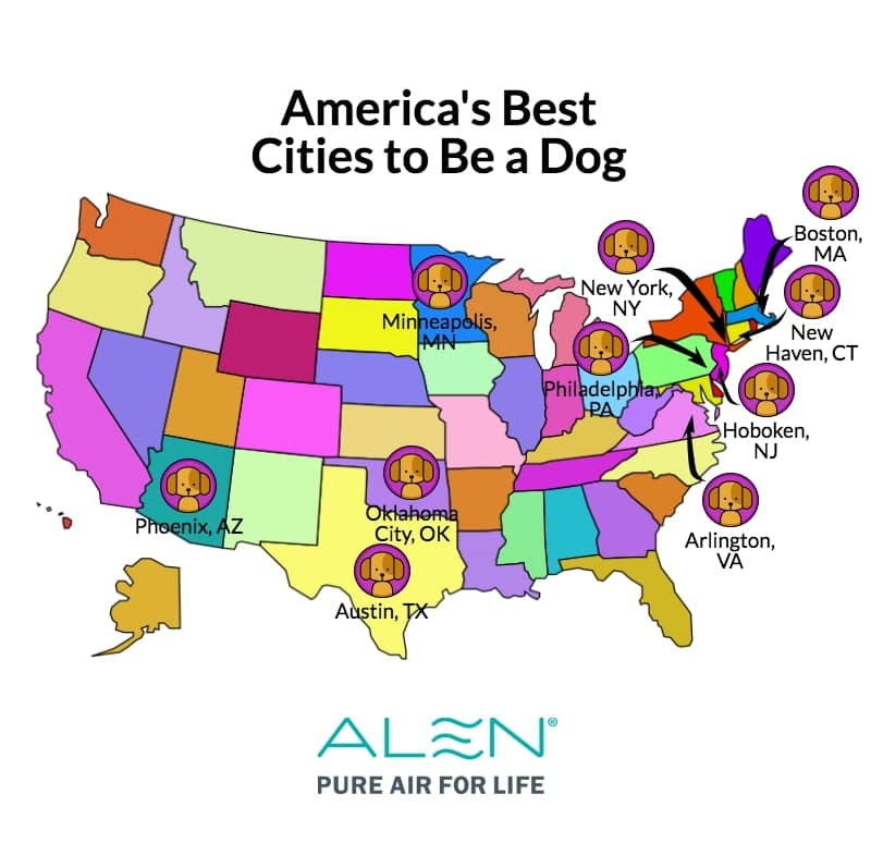 best cities to be a dog infographic