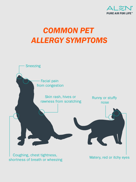 Pet Allergy Symptoms Infographic