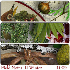 Field Notes {Winter}
