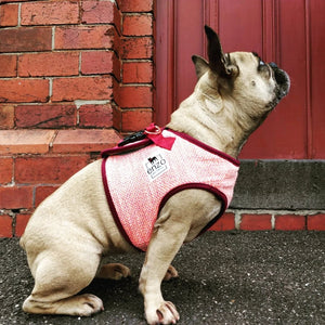lily | pink summer harness