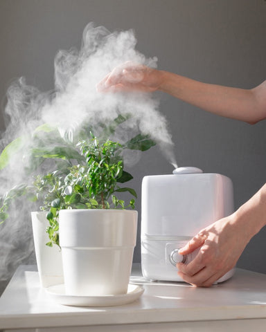 Women's hands regulate steam from the humidifier and houseplants during the heating season, caring for plants, cleaning and freshening the air in the home for healthy breathing. cleaner, climate device, water evaporation, relax, microclimate, apartment, moisturize, air, purifier, living, lifestyle, diffuser, contemporary, plant,