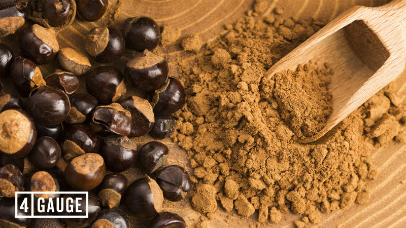Guarana seeds and powder on a wooden table