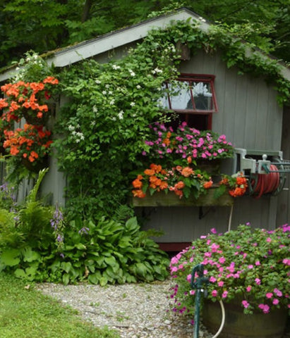 Flower covered shed
