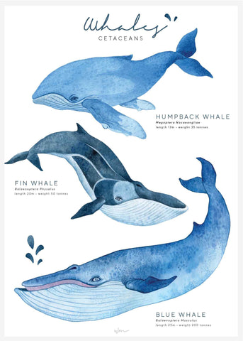 Whales poster decal