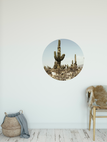 """Middle of nowhere"" cactus wall dot"