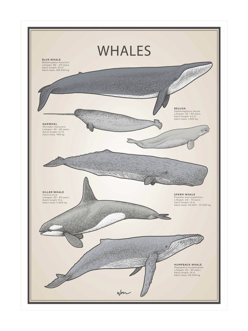 Whales poster decal - Vintage
