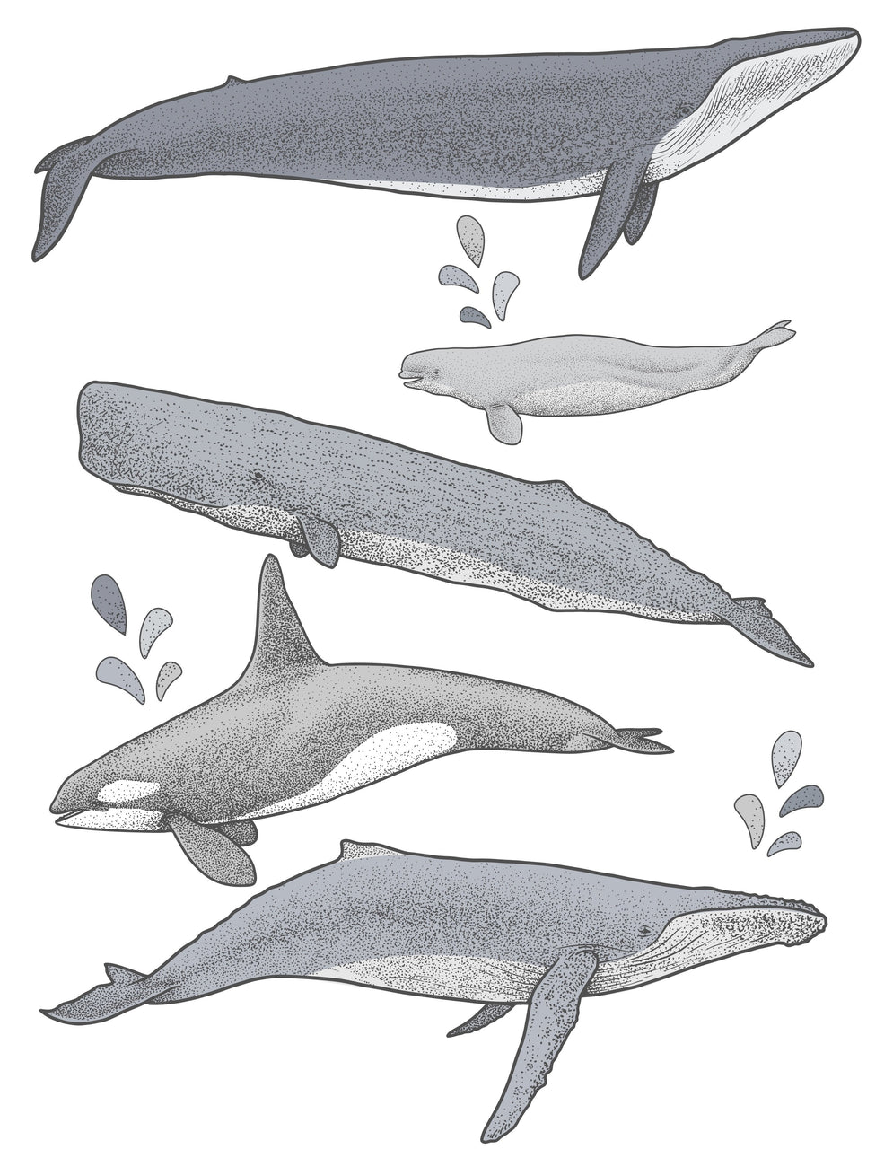 Whale Set Monochrome - Individual cut out whales.