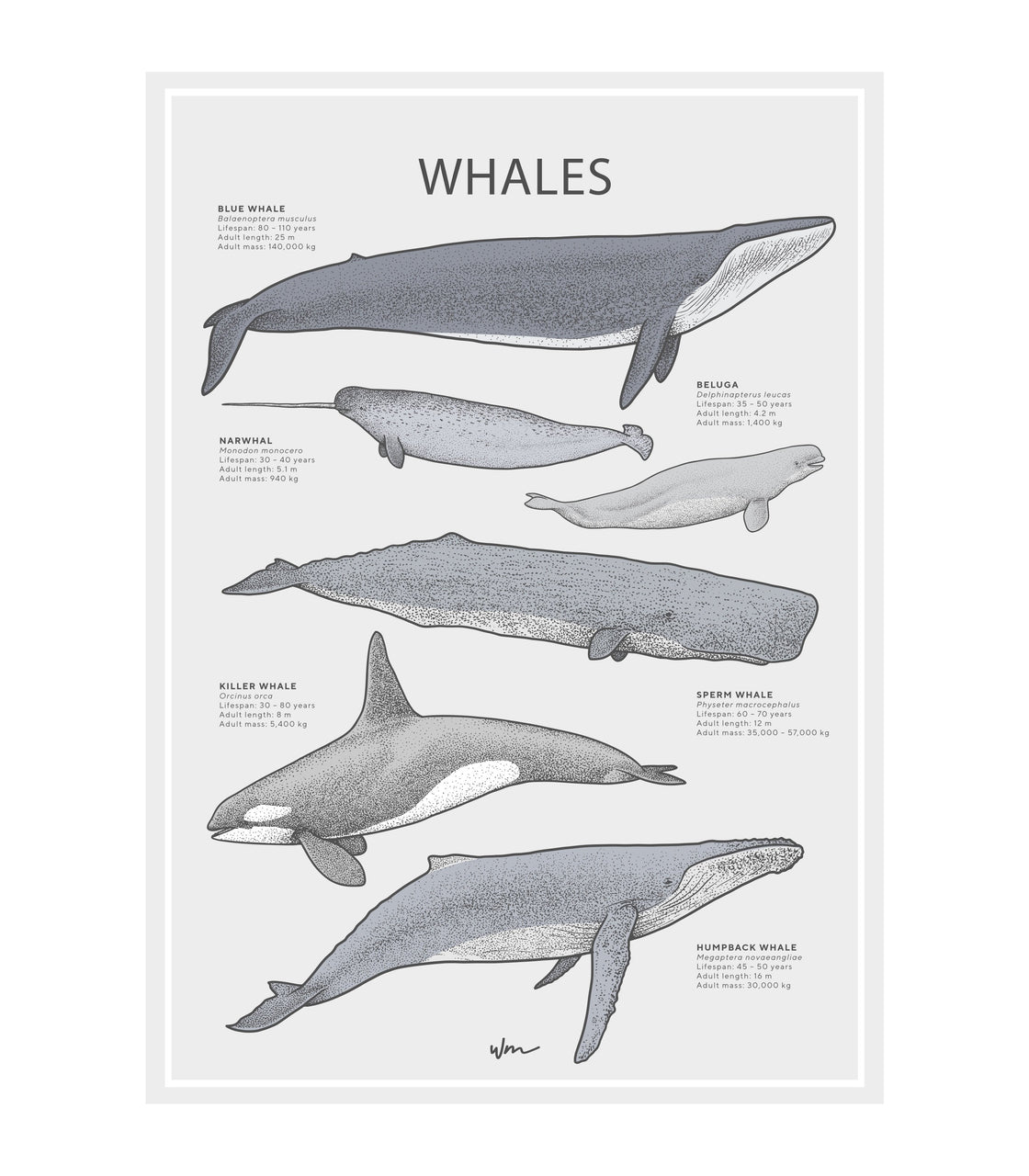 Whales poster decal - Minimalist