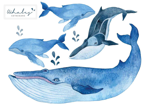 Whale Set Watercolour effect - Individual cut out whales.